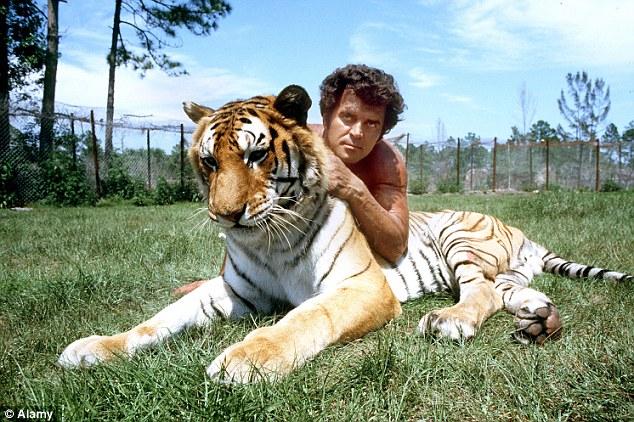 Steve Sipek sa svojim tigrom, Loxahatchee, 1985. godine