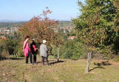 Terensko istraživanje lokaliteta kapelice sv. Marije Magdalene u Bistri